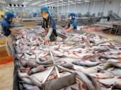 Hủy bỏ chương trình giám sát cá da trơn: Một quyết định đúng đắn!