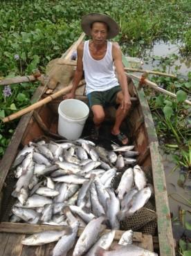 Người dân điêu đứng vì cá chết hàng loạt
