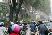 Hà Nội trồng thêm nhiều cây xanh trên tuyến phố Giảng Võ