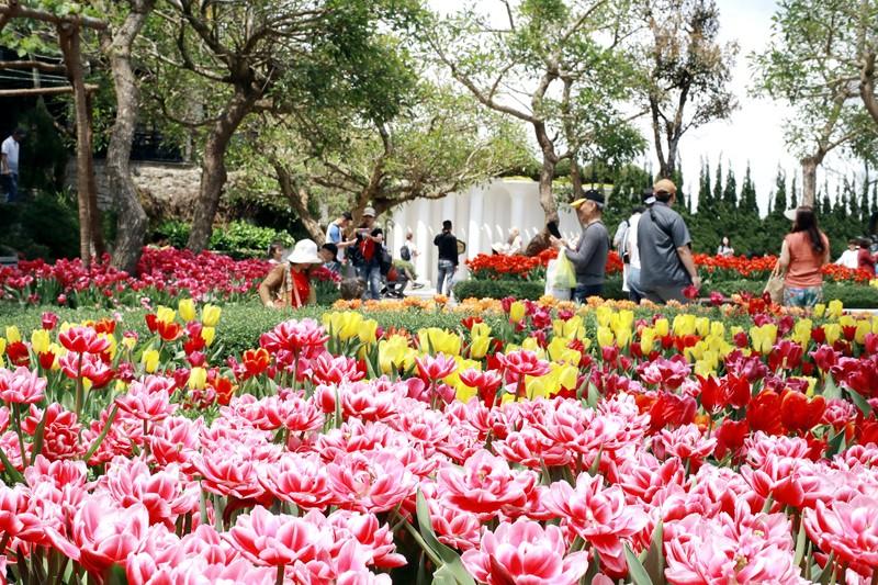 Lên đỉnh Bà Nà ngắm hoa tulip