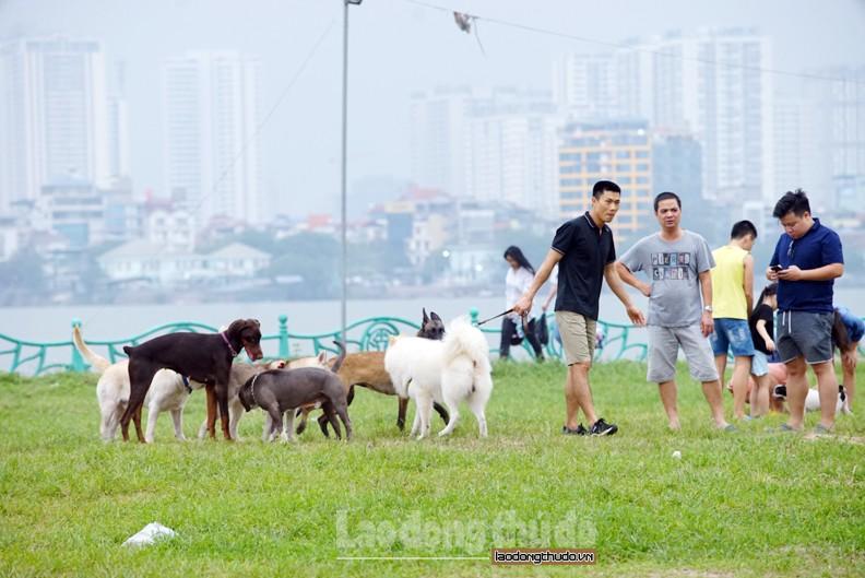 Nhiều người vô tư thả chó tại nơi công cộng