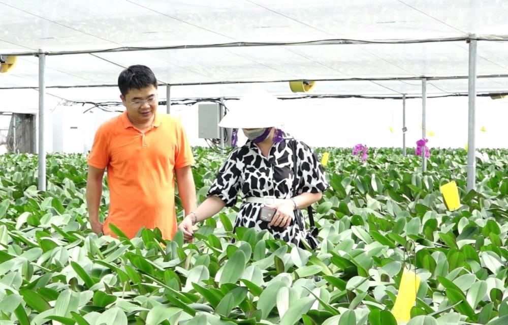 Mô hình trồng hoa lan hồ điệp công nghệ cao ở xã Mỹ Hưng