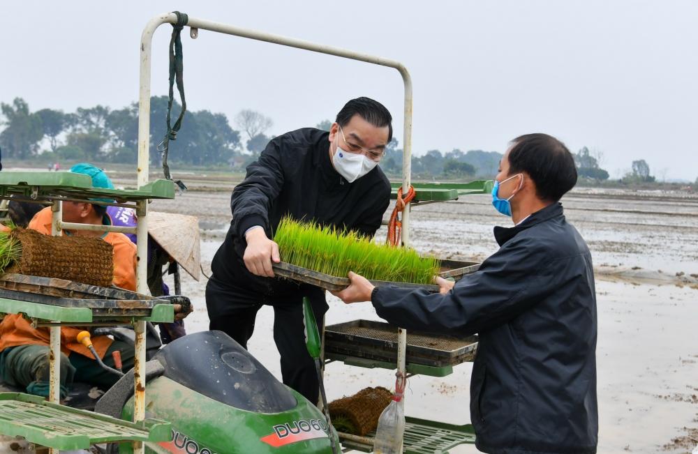Chủ tịch Ủy ban nhân dân thành phố Hà Nội Chu Ngọc Anh tham gia cấy lúa cùng bà con nông dân xã Dị Nậu
