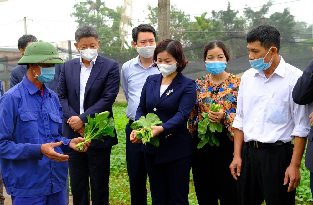Phó Bí thư Thường trực Thành ủy Nguyễn Thị Tuyến thăm mô hình sản xuất rau an toàn tại hợp tác xã Tiền Lệ