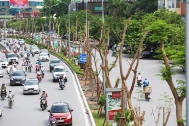 Hà Nội đã trồng trên 210 nghìn cây xanh