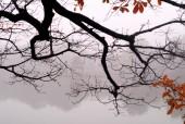 Tháp Rùa huyền ảo trong sương sớm