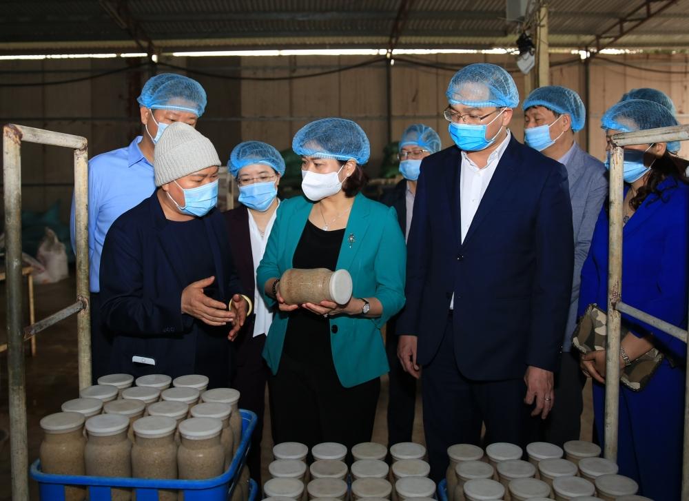 Phó Bí thư Thường trực Thành ủy Nguyễn Thị Tuyến thăm mô hình sản xuất nấm kim châm công nghệ Nhật Bản của Công ty trách nhiệm hữu hạn xuất nhập khẩu Kinoko Thanh Cao