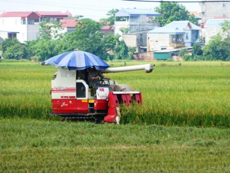 Huyện Thường Tín phấn đấu gieo trồng đạt 5.300ha trong vụ mùa 2017