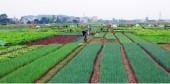 Thường Tín phát triển nông thôn mới gắn với du lịch