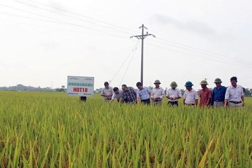 Đẩy mạnh sản xuất nông nghiệp hữu cơ nhằm tạo ra sản phẩm an toàn
