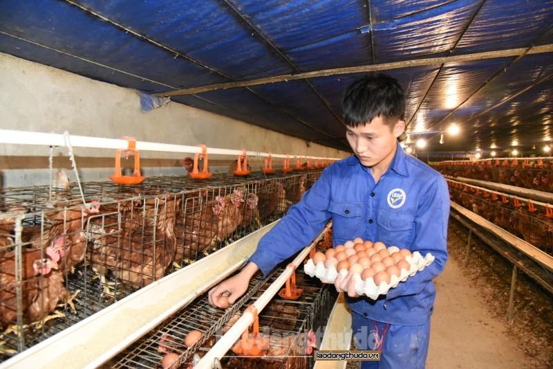 Ban hành chính sách khuyến khích phát triển sản xuất nông nghiệp