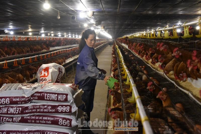 Tạo môi trường, động lực phát triển vì nền nông nghiệp hiện đại