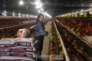 Huyện Quốc Oai: Nhiều chính sách khuyến khích sản xuất nông nghiệp