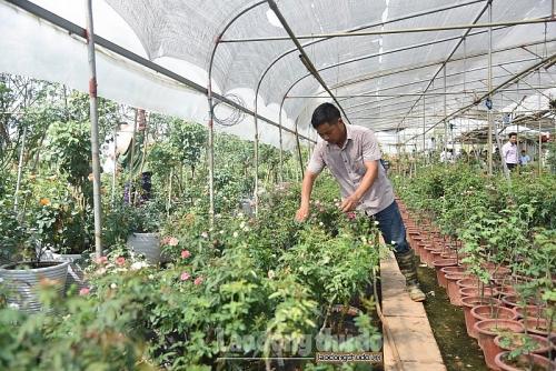 Xây dựng nông thôn mới gắn với nghề trồng hoa