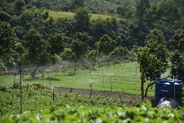 Thăm vùng trồng rau hữu cơ ở xã Bình Yên