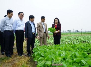 Phát triển các mô hình sản xuất nông nghiệp theo hướng tập trung