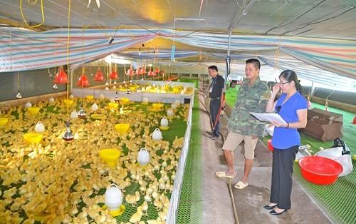 Tổ chức phiên giải trình việc chuyển đổi cơ cấu cây trồng vật nuôi
