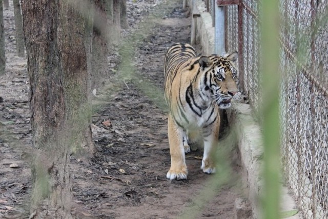 Tăng cường quản lý động vật hoang dã để ngăn ngừa dịch bệnh