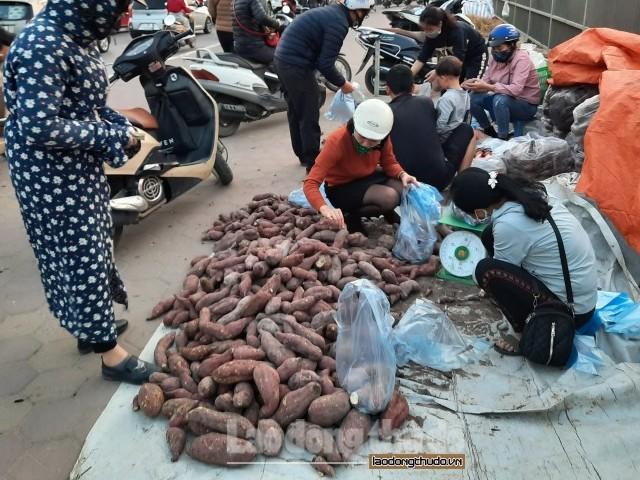 Khoai lang Nhật giá rẻ được bày bán trên các tuyến đường ở Hà Nội