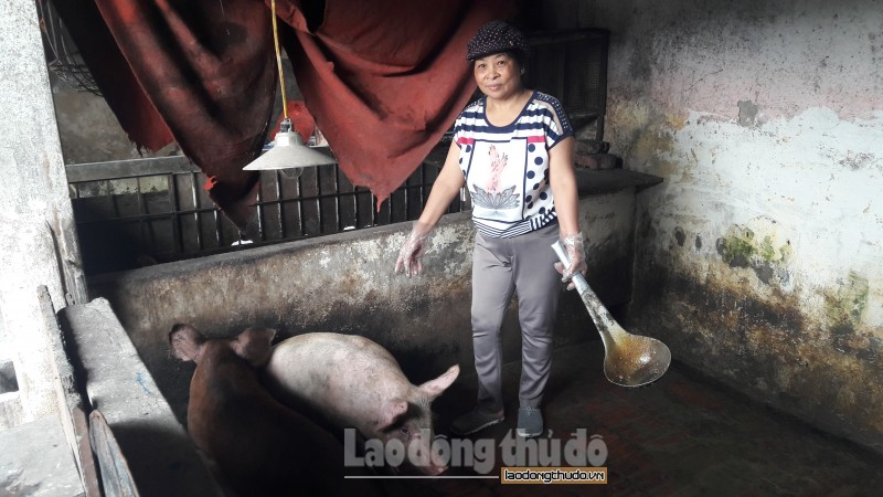 nghich ly lon cang to cang kho xuat chuong