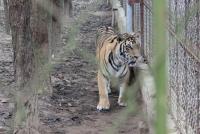 """""""Hành động 3 không"""" chung tay bảo vệ động vật hoang dã"""