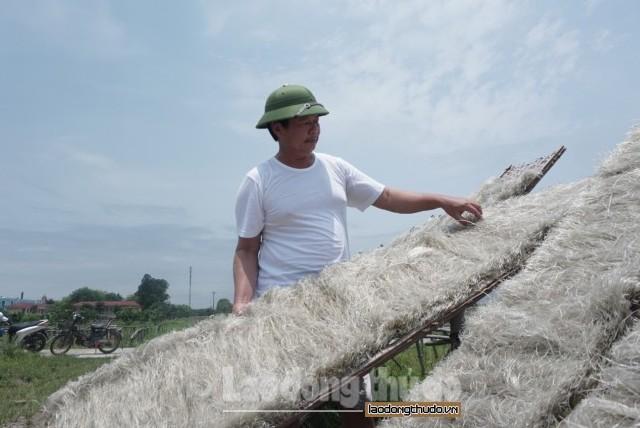 Rộn ràng phơi miến dong trên khắp cánh đồng xã Minh Khai