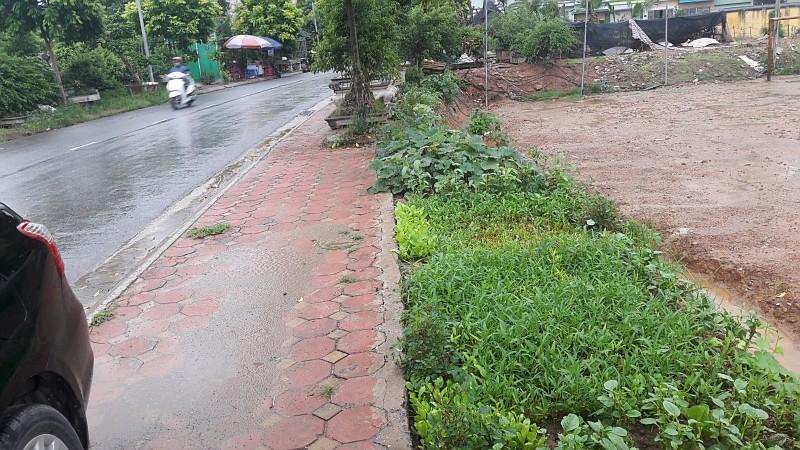 Rau tự trồng ven đường phố chưa hẳn an toàn