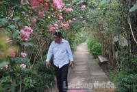Đẹp ngỡ ngàng con đường hoa tường vi ở Hà Nội