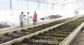 Cần giải pháp đồng bộ trong xử lý chất thải chăn nuôi
