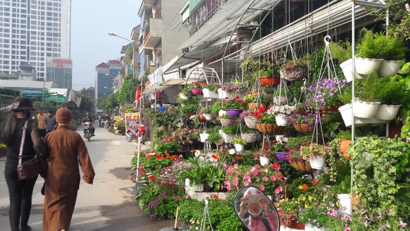 Tưng bừng hương sắc xuân trên chợ hoa Vạn Phúc