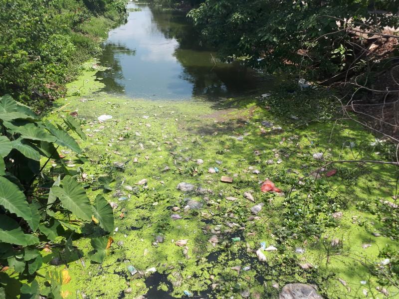 Phường Yên Nghĩa: Ô nhiễm mương thoát nước dân sinh