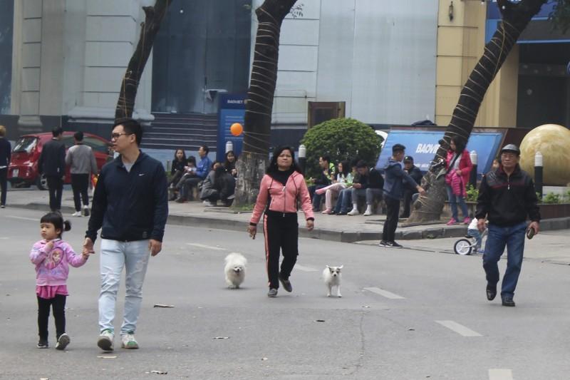 """Chó không rọ mõm vẫn """"tung tăng"""" trên phố đi bộ quanh Hồ Gươm"""