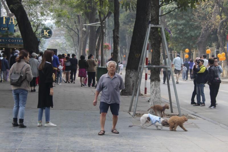 cho khong ro mom van tung tang tren pho di bo ho guom