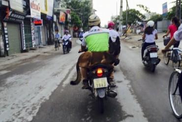 """Cẩn thận khi chở, dắt """"thú cưng"""" tham gia giao thông"""
