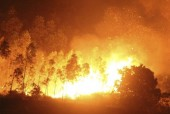 Kỳ 4: Chủ động phòng, chống cháy rừng