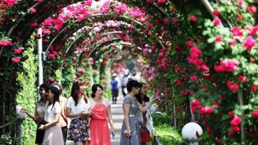 Sắp diễn ra lễ hội hoa hồng Bulgaria lần thứ hai