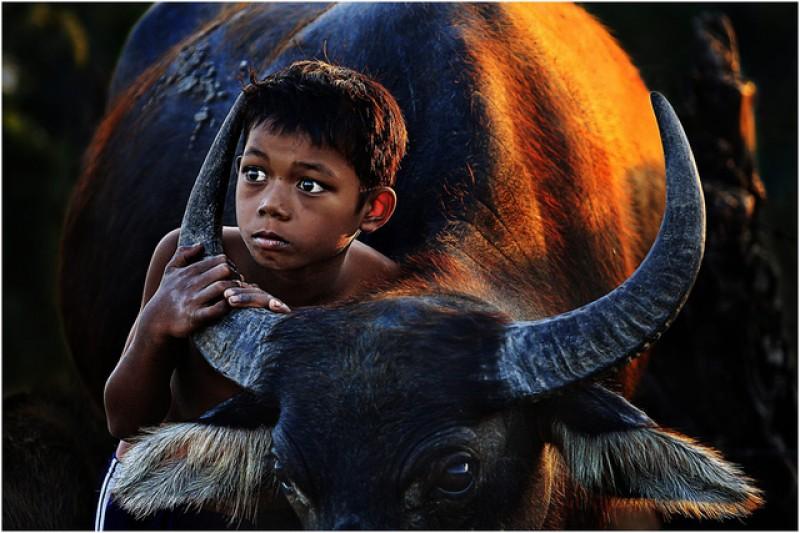 Hơn 3.200 tác phẩm dự Festival Nhiếp ảnh trẻ năm 2017
