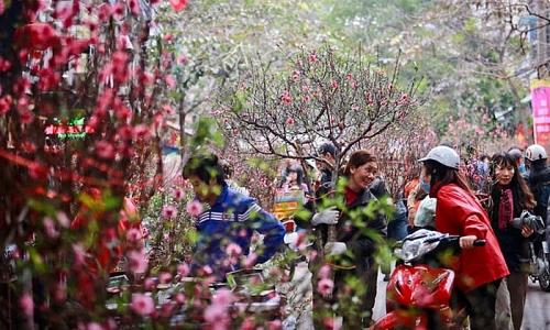 Quận Hai Bà Trưng tổ chức 3 điểm chợ hoa Xuân phục vụ Tết Nguyên đán