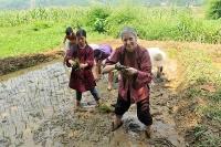 Phát triển du lịch nông nghiệp: Còn nhiều việc cần làm