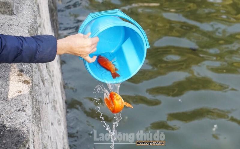 Cá chép tấp nập đưa ông Táo về trời