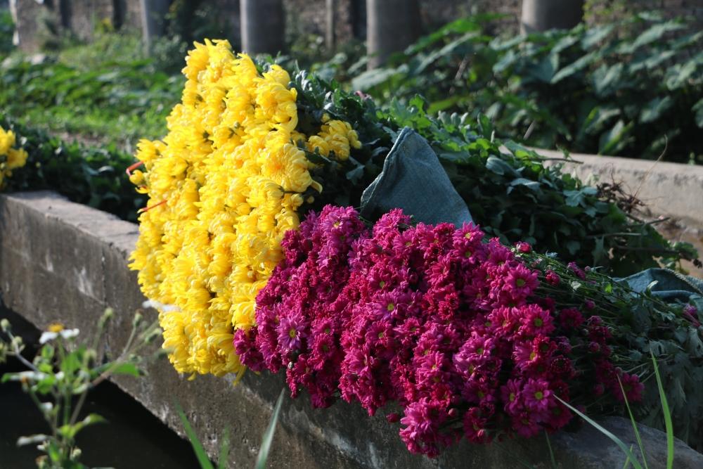 Làng hoa Tây Tựu hối hả những ngày cận Tết