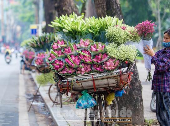 Sen đầu mùa xuống phố khoe sắc khắp đường phố Hà Nội