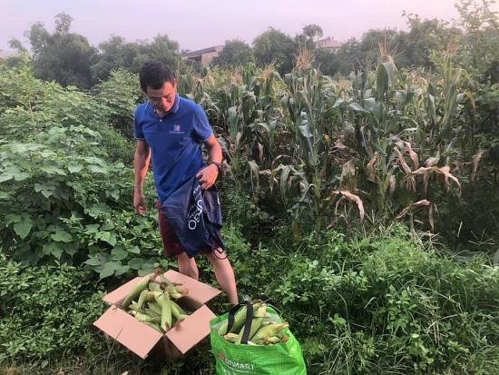 Thầy giáo Hà Nội mở lớp học qua Zoom, bán cả ngô đang thu hoạch để ủng hộ Bắc Giang chống dịch