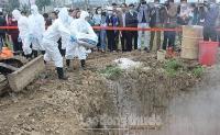 5 quận, huyện đã qua 30 ngày không có phát sinh bệnh dịch tả lợn châu Phi