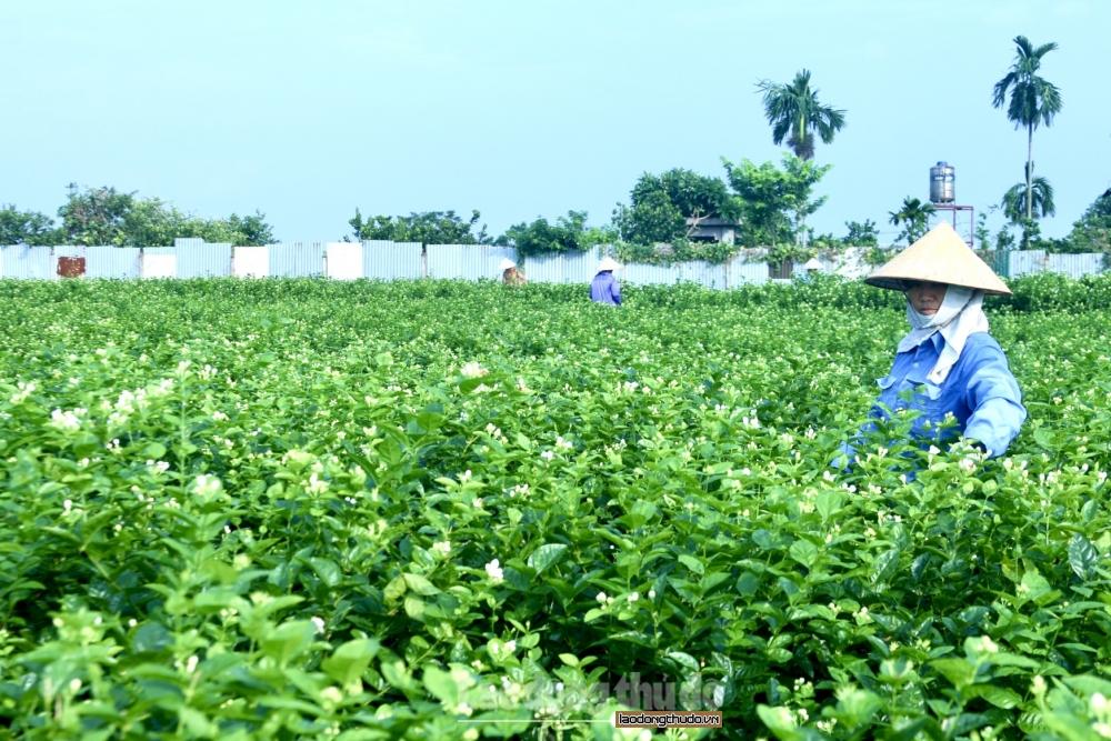 Phát động phong trào thi đua trong công nhân viên chức lao động ngành Nông nghiệp