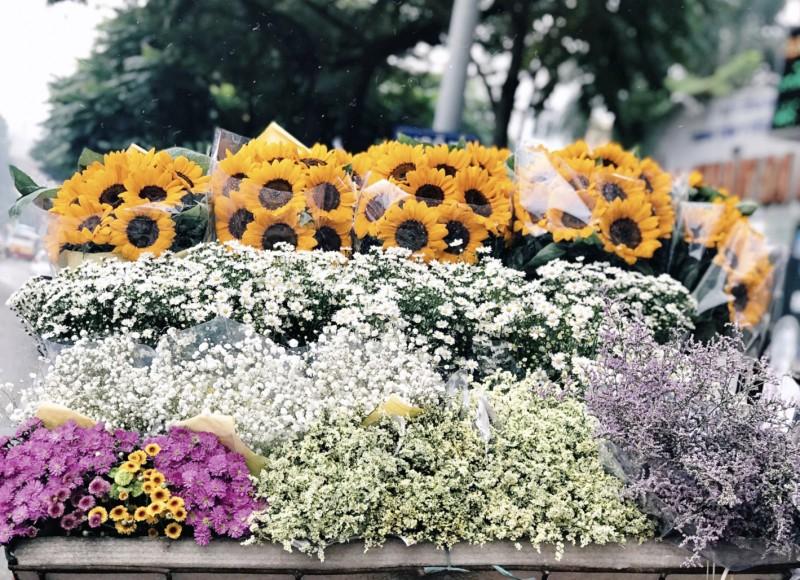 ha noi tinh khoi sac trang cuc hoa mi