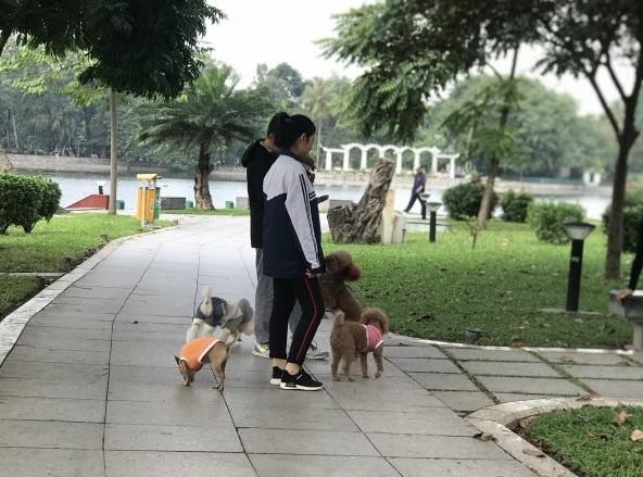 Tình trạng chó thả rông: Nỗi sợ vẫn chưa chấm dứt