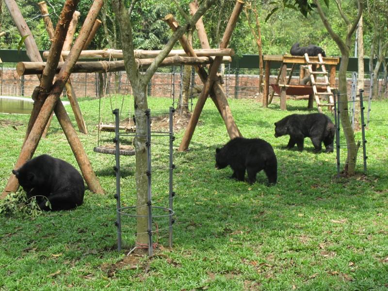 Hoàn tất hạng mục cuối của Dự án Trung tâm Cứu hộ gấu Việt Nam