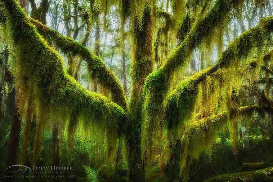 16 cây đẹp, thế giới, du lịch,