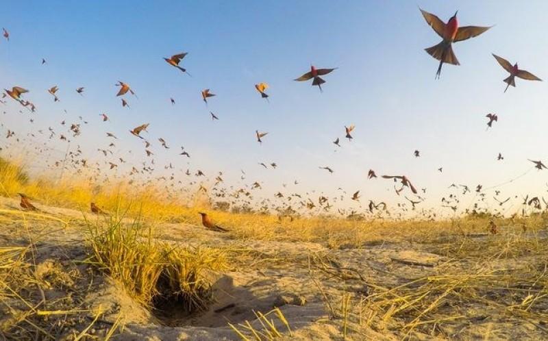 Ấn tượng vẻ đẹp thiên nhiên trong bộ ảnh thế giới tuần qua